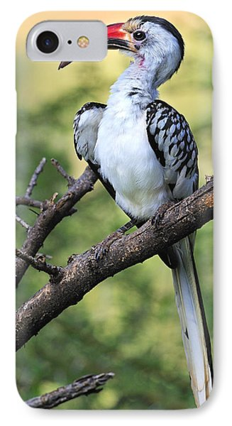 Red-billed Hornbill IPhone Case by Tony Beck