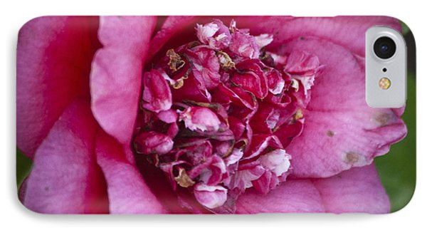 Red Camellia Phone Case by Teresa Mucha