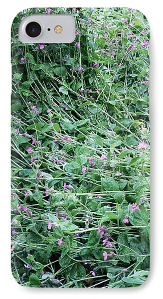 Red Campion (silene Dioica) Phone Case by Maxine Adcock