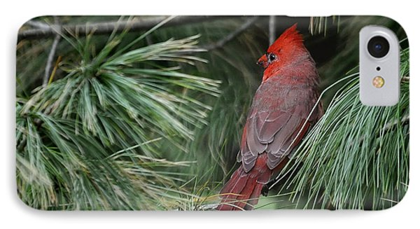 IPhone Case featuring the photograph Red Cardinal In Green Pine by Nava Thompson