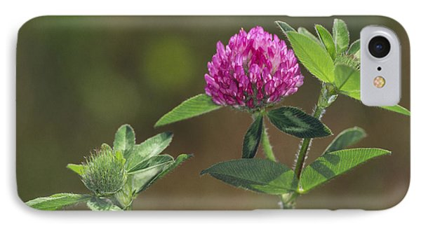 Red Clover Blossom IPhone Case