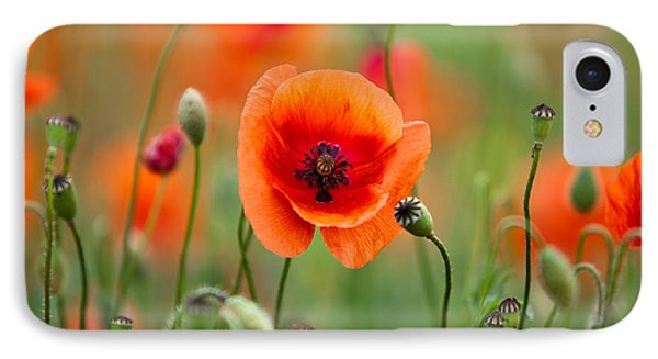 Red Corn Poppy Flowers 07 IPhone Case by Nailia Schwarz