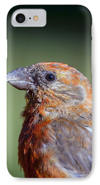 Red Crossbill IPhone Case by Derek Holzapfel