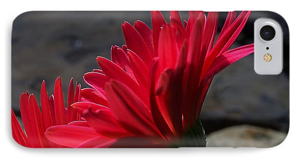 Red English Daisy IPhone Case by Joe Schofield