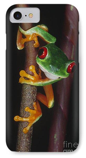 Red-eyed Tree Frog Agalychnis Callidryas Phone Case by Gregory G. Dimijian, M.D.