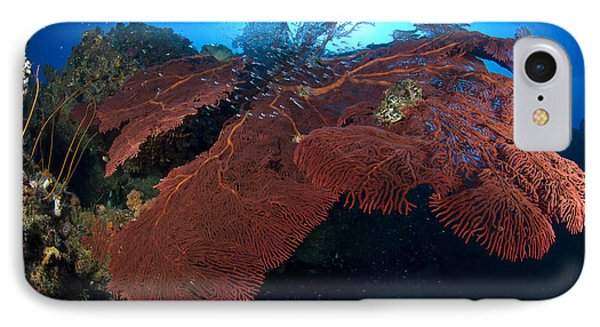 Red Fan Cora With Sunburst, Papua New Phone Case by Steve Jones