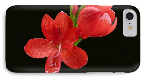 IPhone Case featuring the photograph Red Flower by Lynn Bolt
