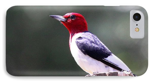 Red-headed Woodpecker - Statue IPhone Case
