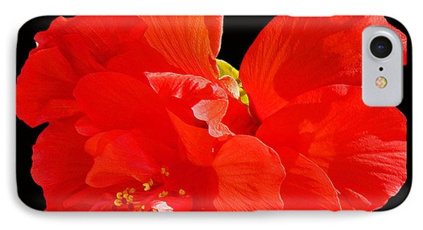 Red Hibiscus IPhone Case by Cindy Manero