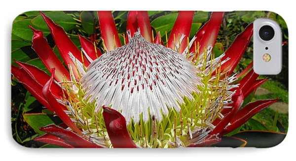 Red King Protea IPhone Case by Rebecca Margraf