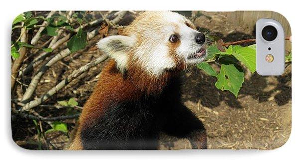 Red Panda Feeding Time Phone Case by Ausra Huntington nee Paulauskaite