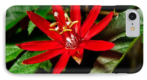 Red Passion Phone Case by Christopher Holmes