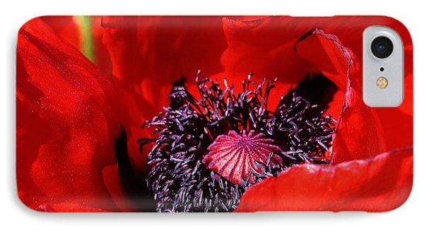 Red Poppy Close Up IPhone Case