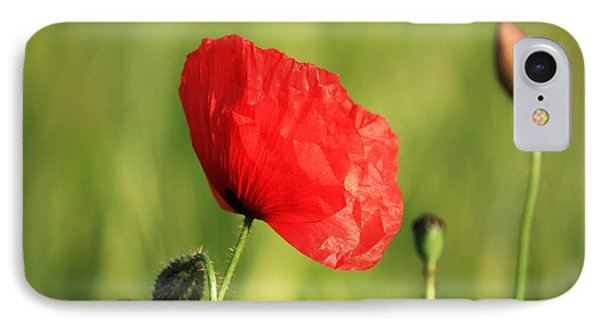 Red Poppy In Field Phone Case by Pixel Chimp