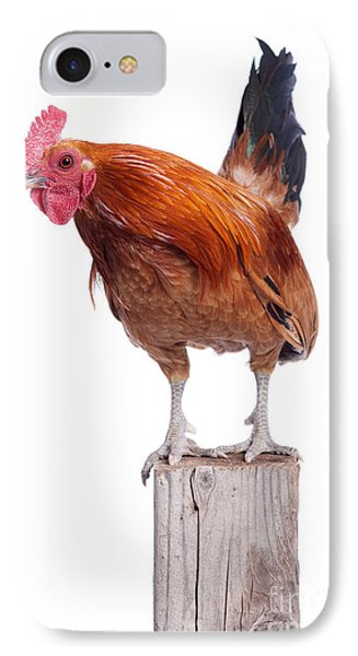 Red Rooster On Fence Post Isolated White Phone Case by Cindy Singleton