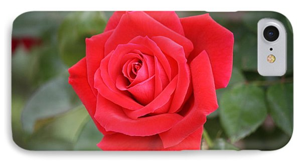 IPhone Case featuring the photograph Red Rose by Donna  Smith