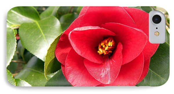 Red Rose Knock Out Phone Case by Sandi OReilly