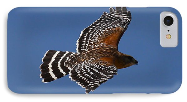 Red-shoulder Hawk IPhone Case by Paul Marto