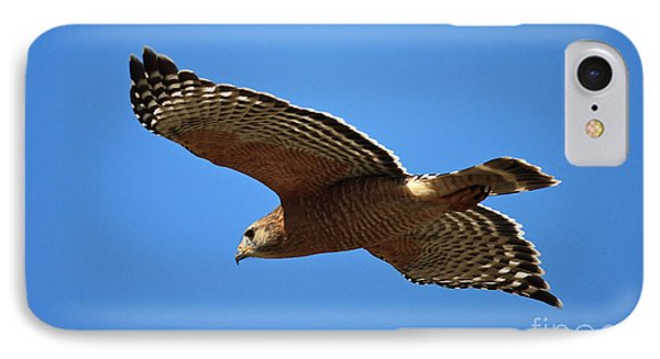 Red Shouldered Hawk In Flight IPhone 7 Case by Carol Groenen