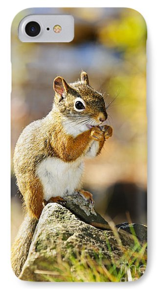 Red Squirrel IPhone Case by Elena Elisseeva