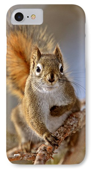 Red Squirrel In Winter Canada IPhone Case