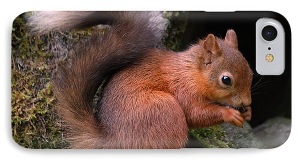 IPhone Case featuring the photograph Red Squirrel by Lynn Bolt