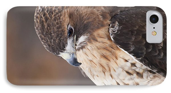 Red Tail Hawk Phone Case by Cindy Lindow