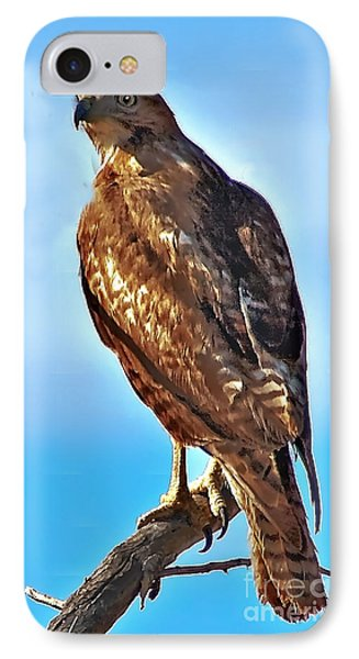 Red Tail Hawk IPhone Case by Robert Bales