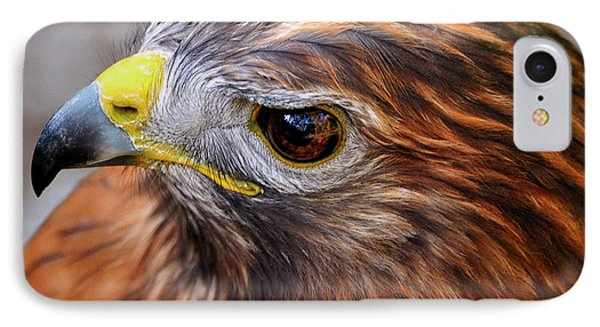 Red-tailed Hawk Close Up IPhone Case