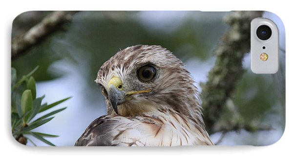 Red-tailed Hawk Has Superior Vision Phone Case by Travis Truelove