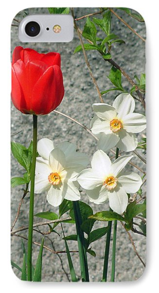Red Tulip IPhone Case by Richard James Digance