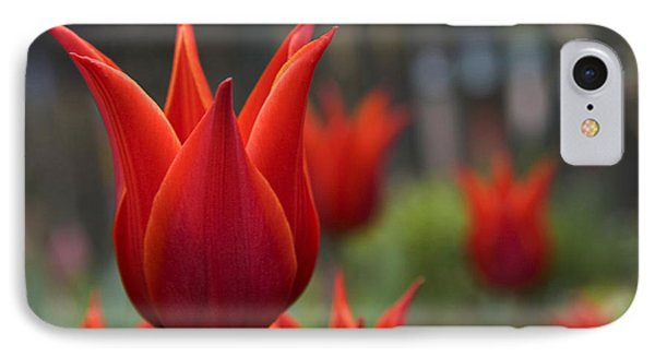 Red Tulips IPhone Case by Michael Friedman