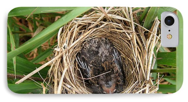 Red-winged Blackbird Baby In Nest Phone Case by J McCombie