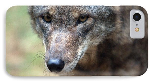 Red Wolf Closeup Phone Case by Karol Livote