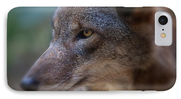 Red Wolf Stare Phone Case by Karol Livote