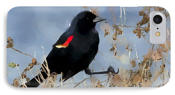 Redwing Blackbird IPhone Case by Betty LaRue