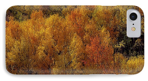 Reflections Of Autumn Phone Case by Carol Cavalaris