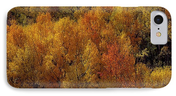 Reflections Of Autumn IPhone Case by Carol Cavalaris