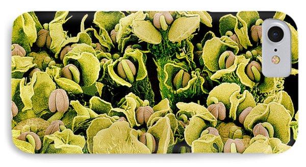 Reproductive Flower Parts, Sem Phone Case by Susumu Nishinaga