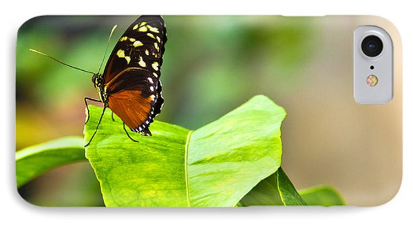 Resting On A Petal IPhone Case