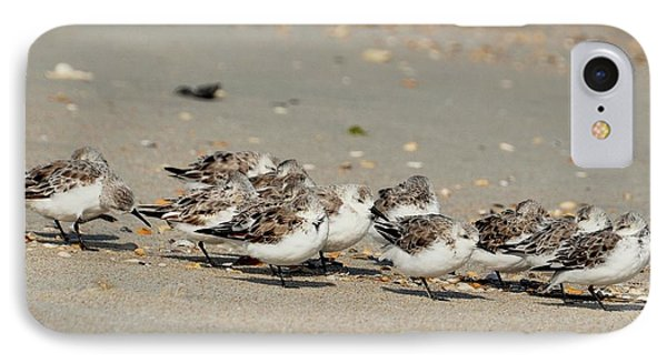 Resting Sandpipers IPhone Case