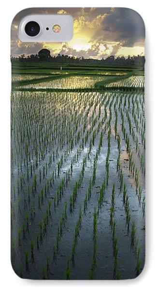 Rice Fields, Near Ubud Bali, Indonesia Phone Case by Huy Lam