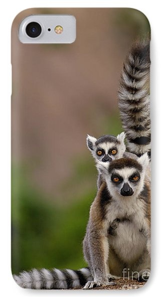 Ring-tailed Lemur Lemur Catta Mother Phone Case by Pete Oxford