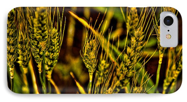 Ripening Wheat Phone Case by David Patterson
