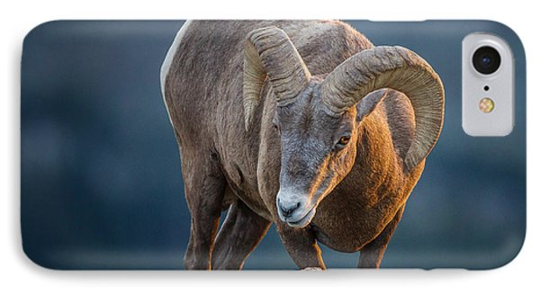 Rocky Mountain Big Horn Ram IPhone Case by Ronald Lutz