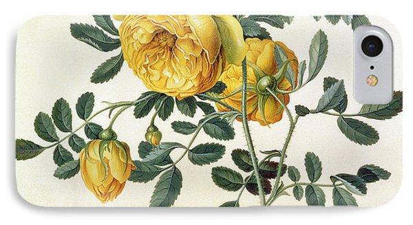 Rosa Hemispherica Phone Case by Georg Dionysius Ehret