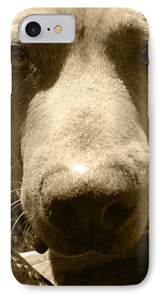 IPhone Case featuring the photograph Roscoe Pitbull Eyes by Kym Backland