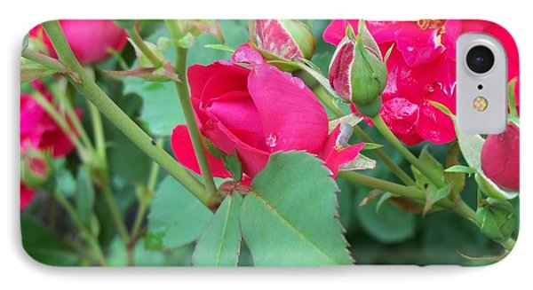 Rose Bud With Water Droplet IPhone Case