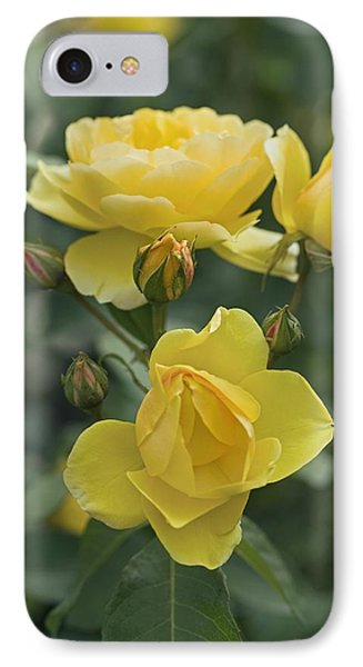 Rose (rosa 'charlotte Auspoly') Phone Case by Dr Keith Wheeler
