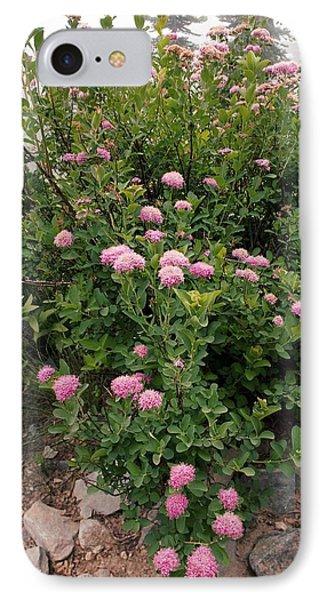 Rosy Spirea (spiraea Splendens) IPhone Case